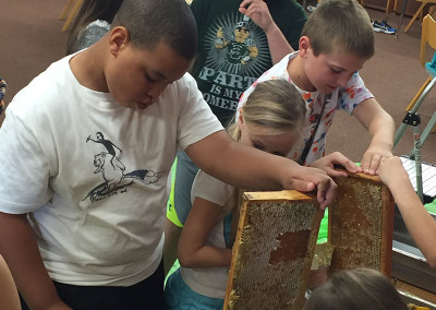 Children removing wax caps from honeycomb